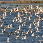 自1970年以来,北美已损失近30亿只鸟