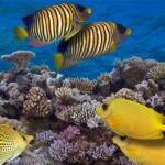 就像是一个DJ:健康的珊瑚礁声音可能会吸引鱼去到受损的珊瑚礁