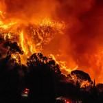 森林大火后遗症