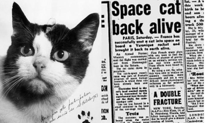 费利切特是第一只进入太空的猫科动物,她终于得到了应得的荣誉