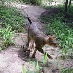 马达加斯加岛上猫的秘密