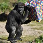 英国动物园恐无法自疫情影响中恢复