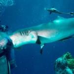 从电影大白鲨到鲨鱼保护者