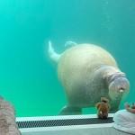 想和海象共眠吗?试试比利时水中饭店