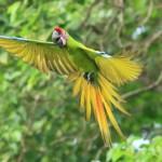 哥斯达黎加,发展自然观光的典范