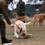 狗能够从患者唾液嗅出Covid-19
