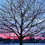 芝加哥的橡树园—建筑大师莱特的游乐场