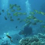 全球珊瑚礁正面临死亡威胁