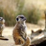 肯尼亚探访野生动物自助旅行