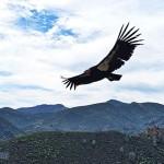 加州尖顶国家公园