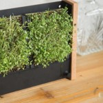 """这款""""迷你垂直农场""""只要简单 2 步骤:放种子、加水,10 天后就能收成营养满满的植物苗"""