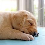 养狗可降低心脏病死亡率?