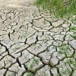 气温升高加速农作物虫害情形