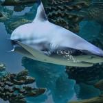 游速最快鲨鱼恐面临灭绝
