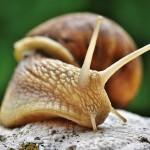 泰国工业蓬勃 蜗牛美容当道