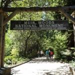 穆尔红木森林Muir Woods、沿海小镇Sausalito、北边的金门大桥