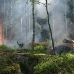 全球有可能会消失的森林