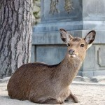 疫情新现象:野生动物在封锁城市逛大街