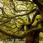 欧洲年度之树