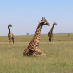 非洲十大野生动物之旅