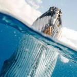 挪威对鲸鱼肉的需求量日益加增