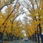 十个在地人推荐的加州秋景