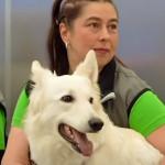 赫尔辛基机场使用嗅探犬检测Covid-19