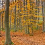 气候危机使秋叶更早掉落