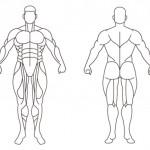 肌肉要如何搭配训练才能有效果呢?