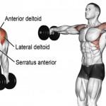 如何练出你的麒麟臂、天鹅臂呢?
