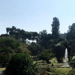 爪哇惊奇(十一) 茂物植物园(下)