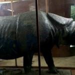 爪哇惊奇(十二) 茂物动物博物馆