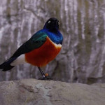 研究:鸟儿环绕四周让人更快乐