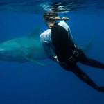 海里玩水如何免受鲨鱼伤害?
