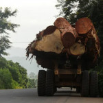 西方饮食习惯导致每人每年损失四棵树