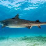全球各式与鲨鱼近距离体验行程
